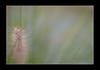 2009 06 27_Spania2009_1333 (Nbjorlo) Tags: flowers summer macro spain torrevieja ashowoff