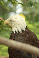 IMG_3491 (themcmillens) Tags: zoo kentucky louisville louisvillezoo zoosofnorthamerica