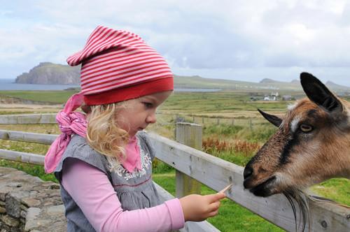 Una Feeding Goat