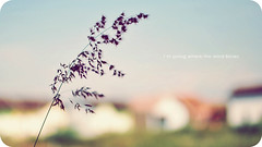 I'm going where the wind blows (khaniv13) Tags: grass closeup nikon dof bokeh lowangle hbw d40x afs35mmf18