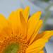 0908 flowers #5