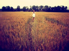 fields of gold (Rowena R) Tags: colour beautiful field wheat country r themed rowena luvmmy fieldsofwheatphotoshoot