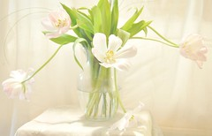 Beauty in Imperfection (luvpublishing) Tags: pink flowers nature floral tulips arrangement bouquets imperfection glassvase pinktulips cutflowers clearglassvase wonderfulworldofflowers softdreamyandethereal