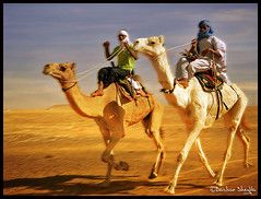 Who's gonna win the Race? (Bashar Shglila) Tags: sahara festival race desert action win libya camels soe gonna whos touareg actions ghadames libia libyen lybie  lbia  libi  libiya sahran  anawesomeshot liviya  libija       lbija  lby libja lbya liiba livi    teniri
