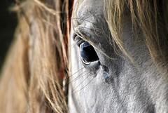 sguardo (luporosso) Tags: horses horse naturaleza nature closeup eyes nikon natura cavalli cavallo occhio d60 naturalmente nikond60 luporosso theauthorsplaza