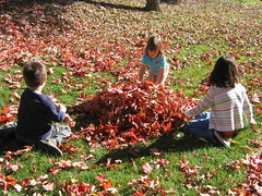 Pile o' leaves fun
