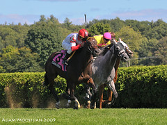 Cannonball wins the Commentator (gutsygelding) Tags: horse race saratoga nick racing horseracing handicap spa jv zito commentator cannonball nyra silvertimber