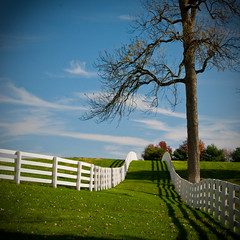 rolling hills (Will Montague) Tags: wood november autumn horse white tree green fall grass lines clouds fence nikon shadows bluegrass farm kentucky bluesky foliage rollinghills equine whitefence montague horsefarm d80 willmontague