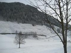IMG_1442 (schneeengel 2.0) Tags: schnee winter feld baum rauris