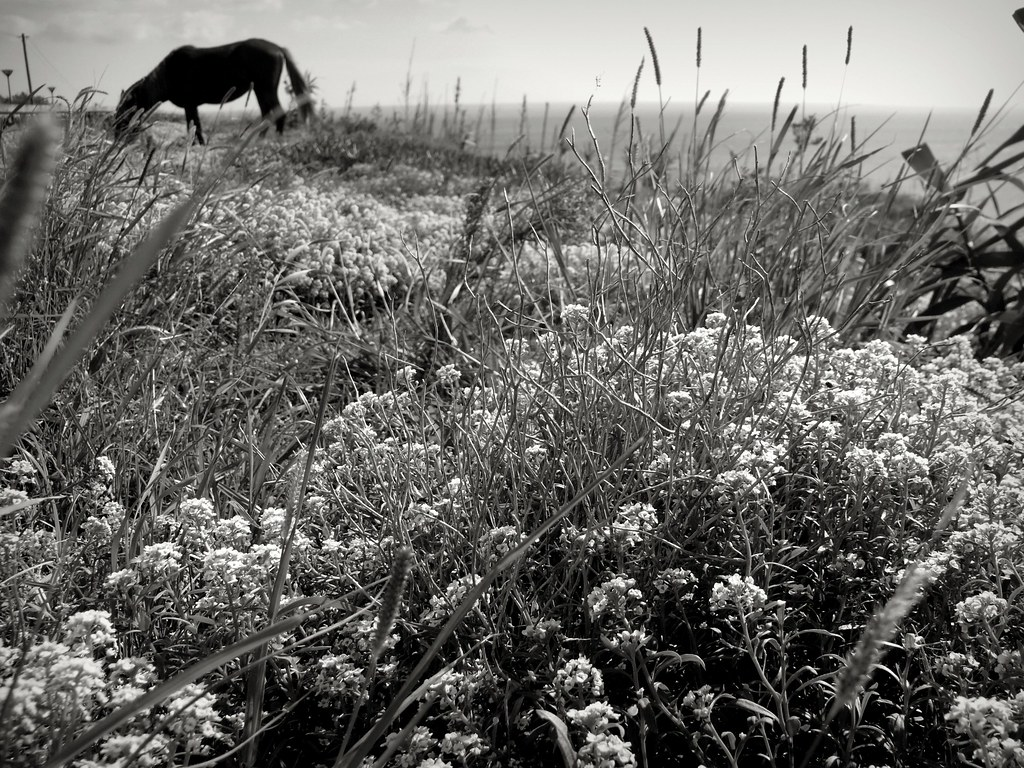 wildflowers #P1220696