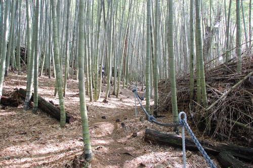 2009.11.14-15 水社大山.078.jpg