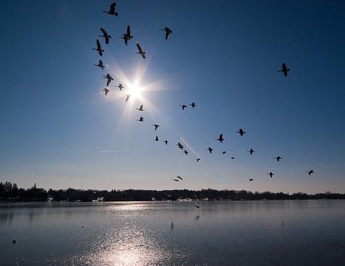 Lake Wilcox is frozen