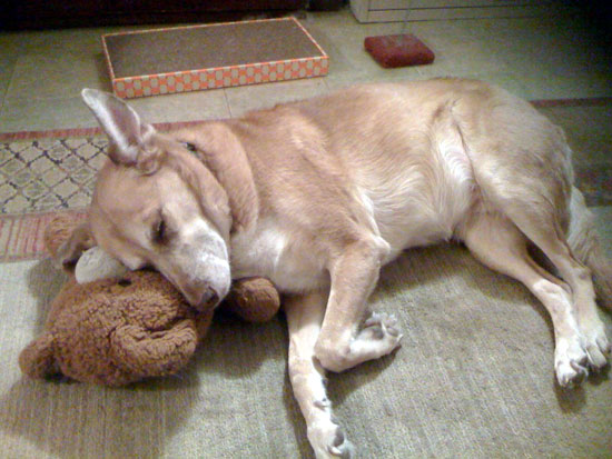 Una withTeddy Bear Pillow