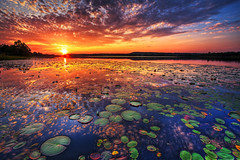 Sensory Overload (tobey308) Tags: sunset texture oklahoma water clouds reflections photography twilight colorful sunsets todd lilypads tobey amazinglight theunforgettablepictures toddtobeyphotography