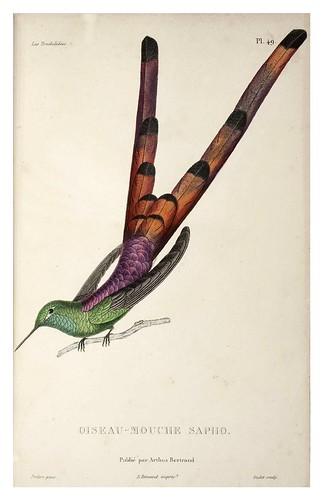 029-Les Trochilidées ou les Colibris et les Oiseaux-Mouches… 1832- René Primevère Lesson- DGZ–Göttinger Digitalisierungszentrum