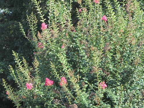 Khu vườn của Na - Page 5 5803955301_29c44b2c31