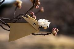 Rabbit and Plum (Ichigo Miyama) Tags: うさぎとウメの花 rabbit plum ウメ 梅 prunusmume バラ科 rosaceae 春 spring flower plant うさぎ 折り紙 おりがみ origami paper
