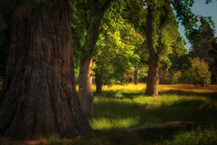 Nature's Touch (Kevin_Jeffries) Tags: naturestouch kevinjeffries nature trees forest pathway leaves green summer light shadows sunny nikon nikkor d7100 digital tree new grass landscape fresh color art textures soft atmosphere dreamy pathwayhome flickrsbest