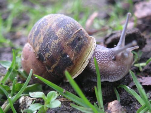 snail4-st-cats