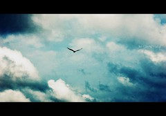 ...Let the Fairy in you fly... [EXPLORED] ((_.*`*.ChobiWaLa.*`*._)) Tags: cloud color bird gloomy sad message bangladesh pakhi pervez megh chobiwala hrizoo