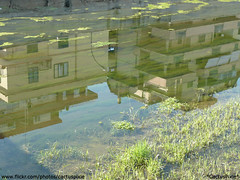 Underwater Buildings (Cactus*Pixie - War is something I DESPISE -) Tags: italy plant rome roma reflection nature water river europa europe italia fiume natura acqua palazzo piante riflessi reflexion bulding palazzi pianta riflesso digitalcameraclub panasoniclumixdmctz3 goldstaraward naturallyartificial photographersgonewild capturethefinest