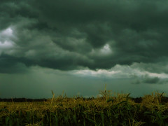 storm brewing.. (PepOmint) Tags: summer storm rain clouds dark corn pretty michigan sunday august jackson ceiling thunderstorm tornado tonight muggy humid litchfield dogdays tassles jacksoncounty hillsdalecounty thisevening michiganthunderstorm wiindy