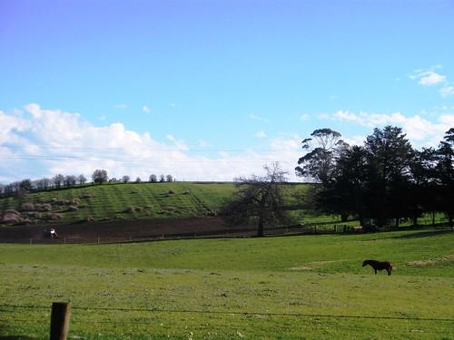 hills + horse.