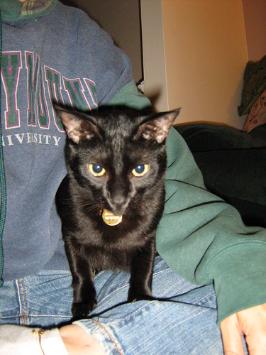 Masala Cat