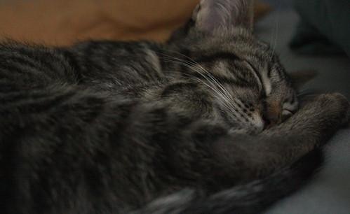 Pippin sleeps