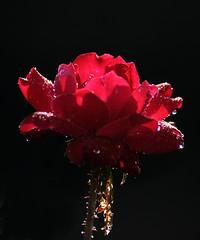 _DSC3968 (pnther60) Tags: backyard roanoke floraandfauna