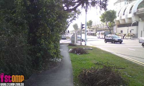 Overgrown tree blocks pavement, inconveniencing pedestrians
