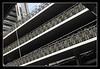 Parked bikes (matt :-)) Tags: holland netherlands lines amsterdam bike bicycle nikon parking line diagonal cycle bici parked nikkor mattia soe olanda linea amstel parcheggio diagonale bicicletta diagonals linee paesi bassi diagonali paesibassi abigfave nikond80 2470mmf28g goldstaraward consonni mattiaconsonni