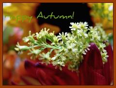 Typical New England Autumnal (AutumnSunOriginals) Tags: macro sunflowers mondays childish innerchild year3 childlike fallbouquet 7daysofshooting smallsunday week11postcardphotos farmstandflowers 73dos