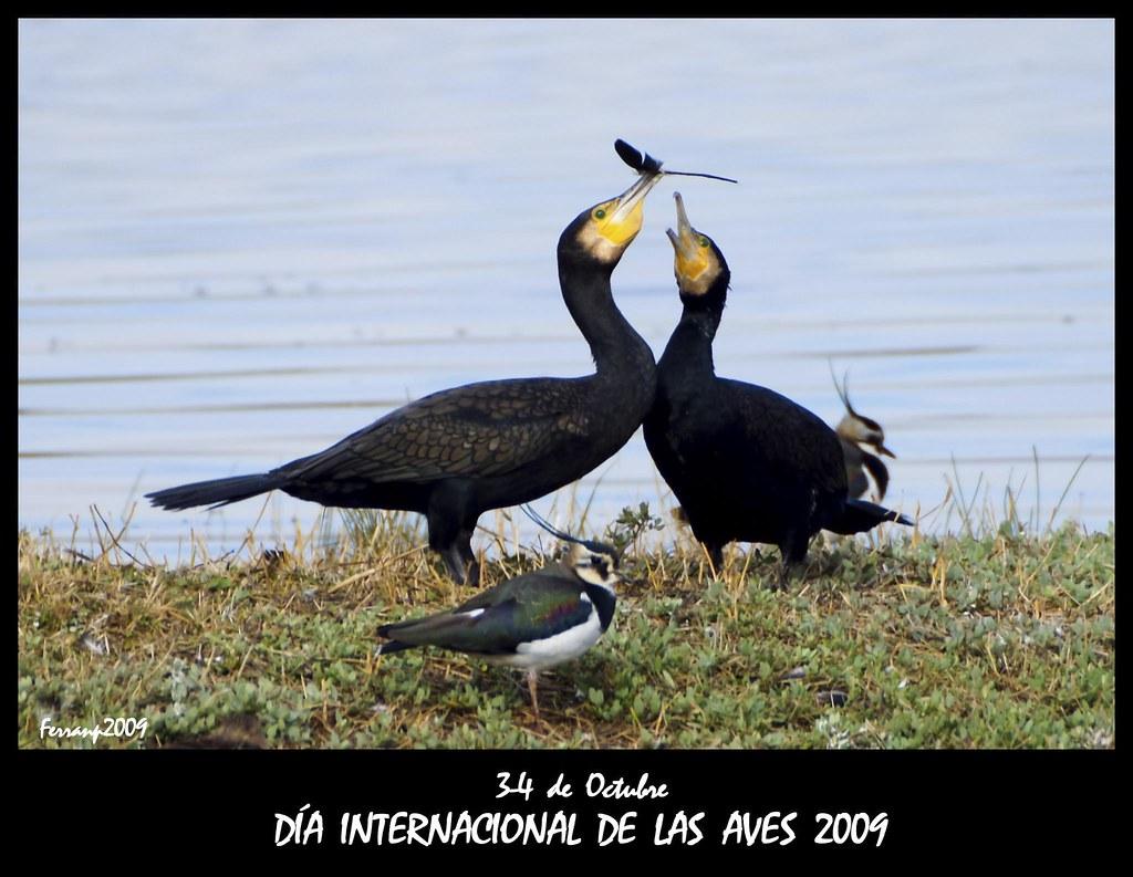 Día internacional de las aves 2009 - International bird day 2009