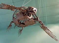 Super Arky (subarcticmike) Tags: canada museum geotagged fossil winnipeg display turtle manitoba replica uofm superhero prehistoric archelon hallelujah universityofmanitoba cretaceous explored subarcticmike superarky edleithcretaceaousmenagerie