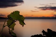 Lman, Soire dore (zmi66 - ZMIphoto) Tags: show trip light lake color art water nikon europe raw cully d700