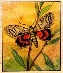 naturainsectes016