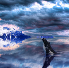 Return to Dreamland (Philerooski) Tags: ocean trees light cliff mountain lake snow mountains water clouds photoshop reflections island scenery perfect phil flood distorted snowy digitalart dramatic surreal symmetry fantasy shore whale ripples unreal imaginary dreamland hdr philerooski