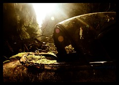 Nature´s revenge (essichgurgn) Tags: auto urban panorama car design automobile decay style icon screen voiture coche carro scrapyard wreck scrap macchina oto automóvil karu schrott motorcar cotxe 汽车 kocsi 50´s خودرو машина автомобиль 汽車 samochód автомобил vehículo otomobil 自動車 epave schrottplatz кола automobiel אוטו कार vettura گاری รถยนต์ bíl avtomobil makinë ئوتومبيل سيَّارة karru αυτοκίνητοmba' મોટરગાડמכונית गाड़ी मोटर बन्डी машин ਗੱਡੀ म् аутомобил ауто awto oyto