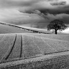 Lead me there (Ian Humes) Tags: blackandwhite bw tree field clouds rural canon landscape geotagged blackwhite farming northernireland backlit agriculture biancoenero agricultural blancinegre countydown arable killyleagh noireblanc canon50d
