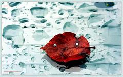 Autumn work photography@art/bysne.ch (LETHO 2706) Tags: autumn blackandwhite fall colors mirror schweiz leaf swiss spiegel herbst blatt picnik stuhl farben swizerland autumnleaf canonefs60mm herbstblatt tamron18200mm schwarzundweiss gerlafingen autumnwork canon450d ysplix vosplusbellesphotos bysne herbstarbeit photographyartbysnech