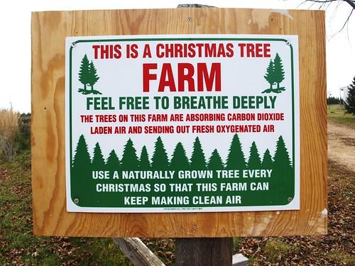 Treefarm 015