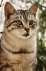 DSC_1032 (Claudiagraz) Tags: cat gatto gattino felino tigrato occhioni occhi eye eyes verdi verde amazing light lighton luci giorno sunny