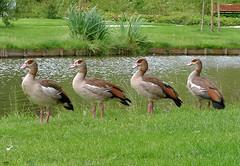 zoetermeer: birdland2