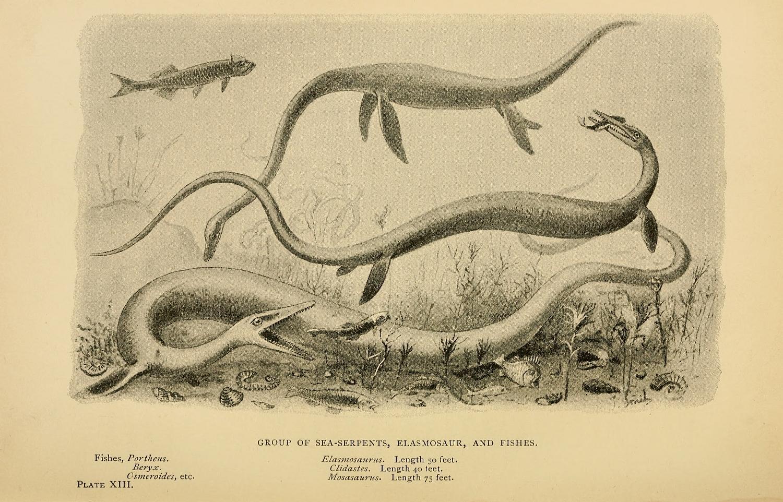 мозазавры картинки
