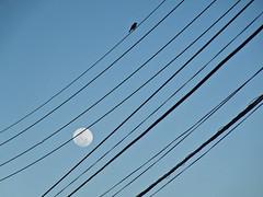 Poesia (Kin Guerra) Tags: blue brazil sky moon bird southamerica thread azul brasil twilight poetry afternoon pssaro cu bahia salvador lua poesia form fio tarde cheia skyblue crepsculo grafismo amricadosul cuazul kinguerra