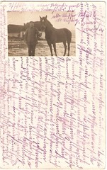 card from 1915 (anna wilder) Tags: horse soldier war wwi krieg ww1 1wk pferd soldat hest feldpost kurrent
