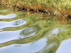 l'acqua gioca tra le erbe... o  il contrario?! (g.fulvia) Tags: water reflections waterfalls acqua croazia krka cascate dalmazia parcodelkrka traverino