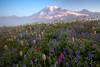 Rainier - 2009 (Jesse Estes) Tags: fog mountrainier wildflowers 5d2 jesseestes jesseestesphotography