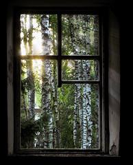 Hope... (Janina Leonaviciene) Tags: old light house tree abandoned window sunrise hope birch legacy lithuania visualart bod lietuva infinestyle flickrestrellas janinaleo dragondaggerphoto limajulija artofimages daarklands bestcapturesaoi